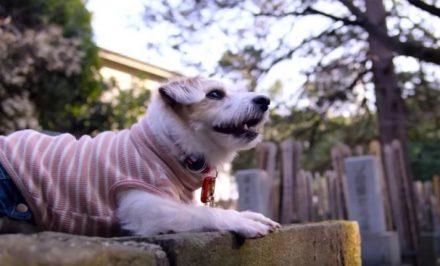 critica apenas cães